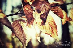 Leaves by Indigo Arts Photography