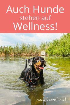 Hier findet ihr Tipps zur Hundepflege, Hundewellness und Tierphysiotherapie. Zu einem Urlaub mit Hund in Kärnten gehört nämlich mehr als Wandern und Baden. Hin und wieder brauchen sie auch die richtige Hundepflege oder einen Besuch in der Hundewaschanlage. Dogs, Animals, Physical Therapy, Hiking, Animales, Animaux, Pet Dogs, Doggies, Animal