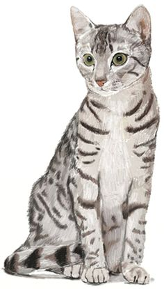 How to draw Cat, step 6