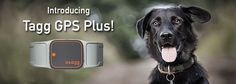 We're on a mission to improve the lives of pets by empowering the people who love them. By combining pet science and GPS pet tracking technology, our products help you care for your pet in ways not previously possible. Dog Training, Apple Watch, Baby Animals, Your Pet, Pets, Advice, Babies, Blog, Products