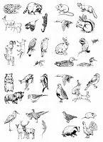 ausmalbilder für kinder - malvorlagen und malbuch • papagei bilder zum ausmalen   birds coloring
