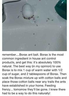 DIY Ant Removal