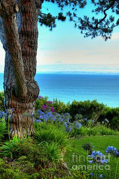 Blue Waters In Palos Verdes California Photograph