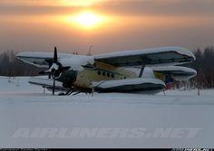 Antonov (PZL-Mielec) An-2 aircraft picture