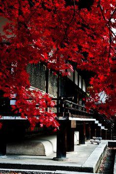 Nin-na-ji Temple, Kyoto