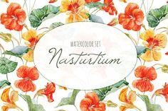 Watercolor Nasturtium Flowers by Anastasia Lembrik on Creative Market