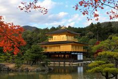 Sanctuaire Meiji, Japon | De Tokyo à Kyoto: voyage initiatique au Japon | Yonder