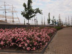 Bloemen in Harlingen. Holland