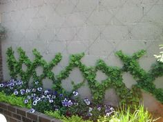 climbing garden to cover ugly cinder blocks.                                                                                                                                                                                 More