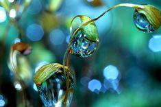 macro photography...