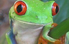 Frog!!!!