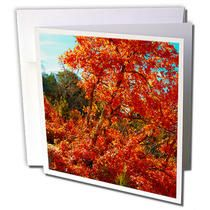 3dRose - Jos Fauxtographee Trees - Red and yellow leaves on trees in Pine Valley, Utah in fall - Greeting Cards
