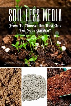 You can achieve high yields in a limited area by applying a quality growing media. Growing Orchids, Growing Plants, Container Plants, Container Gardening, Organic Gardening, Gardening Tips, Weed Types, Weed Seeds, Growing Veggies