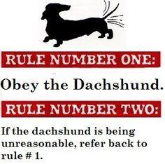 Obey the Dachshund!
