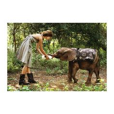 Kiera Knightly Feeds Orphaned Elephant ❤ liked on Polyvore featuring backgrounds, people, animals, keira and keira knightley