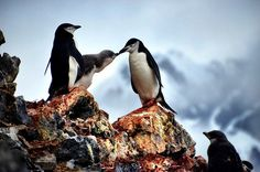 Penguins: The Hard Truth (And Cute Photos) by Matt Long