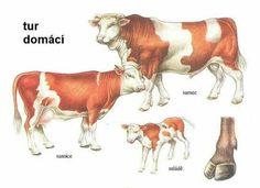 Farm Animals, Animals And Pets, Elementary Science, Life Skills, Safari, Cow, Moose Art, Montessori, Painting