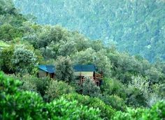 Teniqua Treetops offers unique tented tree house accommodation in the indigenous forest near ‪#‎Knysna‬.... Please contact them directly to check availability and rates on +27 44 356 2868 or email queries@teniquatreetops.co.za