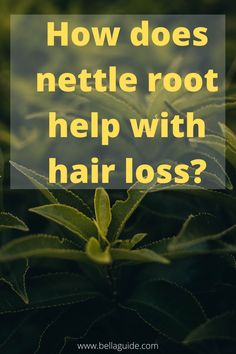 There are hardly any side effects to taking nettle root treatment for hair loss.