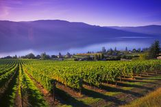kelowna bc, winery