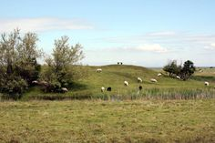 Was wir kennen: Landschaft bei Skanör http://www.travelworldonline.de/traveller/impressionen-aus-skanoer-in-schweden/?utm_content=buffer7727f&utm_medium=social&utm_source=pinterest.com&utm_campaign=buffer .. #twosweden #sweden #schweden #scandinavia #sverige