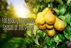 Fall Beauty Essentials: Season of the Pear | Eau Talk - The Official FragranceNet.com Blog
