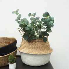 Handwoven natural seagrass baskets are so versatile, store your blankets, toys or even use them for your plants. Great for taking down to the beach or to the shops.  Available in black, natural and colour dipped.  If you dont see a colour that you fancy, get in touch.   DIMENSIONS: 32cm x 35cm