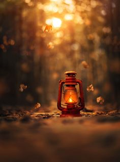 Light of Autumn by Ashraful Arefin on 500px