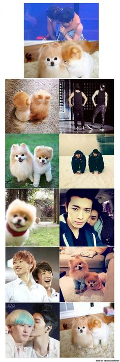 the puppies really fit eunhae :3