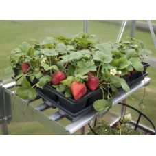 This durable heavy duty Aluminum shelf kit is designed to fit all Palram greenhouse models. It installs in minutes and can be easily repositioned or removed. This aluminum shelf maximizes the space in your greenhouse and installs uniformly next to an identical one to create a seamless shelving platform. These deep shelves are ideal for storing large port, soil bags, fertilizers and garden supplies. Details  Heavy duty Aluminum shelf and Galvanized steel brackets Supports up to 40 kg Modular… Deep Shelves, Metal Shelves, Shelving, Galvanized Steel, Garden Supplies, Shelf, Platform, Kit, Models