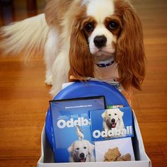 Someone was lucky #oddball #roadshow #repost from @sadie_thecavalier  Thanks so much to @roadshowau for these Oddball goodies! Don't worry ma finally gave me the treats! . Can't wait to watch the movie! ---------------------------------------------------------- #cavalierkingcharlesspaniel #cavaliersofinstagram #cavsofinstagram #blenheim #puppy #cavalierpuppy #puppiesofinstagram #love #puppylove #doglife #dogsofmelbourne #cavitude #itsacavthing #cavlife @cavlife @happy_pet #happy_pet…