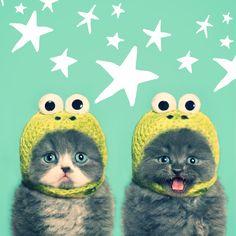 Sparkle kittehs.