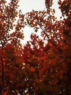 Autumnal Equinox, Autumn Aesthetic, Celestial, Sunset, World, Fall, Plants, Outdoor, Sunsets