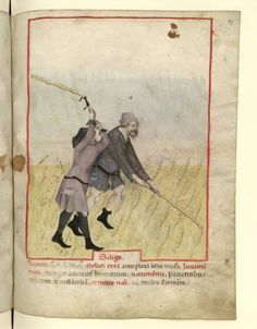 Nouvelle acquisition latine 1673, fol. 47, Paysan(s) battant du blés. Tacuinum sanitatis, Milano or Pavie (Italy), 1390-1400. Medical Careers, Drawing Sketches, Drawings, Bnf, Red Led, Illuminated Manuscript, Illustrations, Golden Age, Medieval