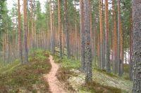 Laulavan mörön luontopolku - Äänekoski