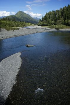 "Quinault River, from the post ""The Nature of Alignment"" 