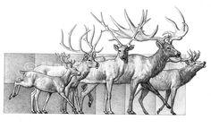 prehistoric european deer