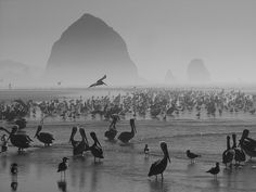 Cannon Beach,Oregon My favorite place on Earth