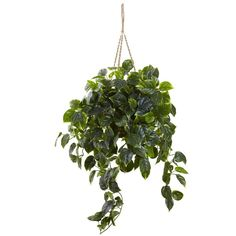 Nearly Natural Pothos Hanging Basket-6844 - The Home Depot