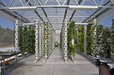 DIY Aeroponic Growing System!!! Unlike aquaponics and hydroponics the plant roots don't stay submerged in the growing fluid -- it's misted. Safer for the plants and stops the spread of disease.