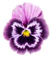 Image result for black and white pansy tattoo flashes free