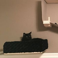 Kelsey Parks added a photo of their purchase Cat Bunk Beds, Bed Shelves, Shelf, Cat Wall Furniture, Cat Towers, How To Clean Furniture, Small Cat, Scratching Post, Cat Love