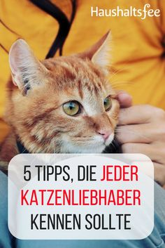 Scratched furniture, cat hair in the laundry, litter box etc. Best order tips . Furniture Scratches, Cat Hair, Enjoying The Sun, All About Cats, Litter Box, Go Outside, Large Dogs, Cat Breeds, I Love Cats