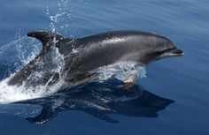 Where to Watch Bottlenose Dolphins Playing in the Bay Area