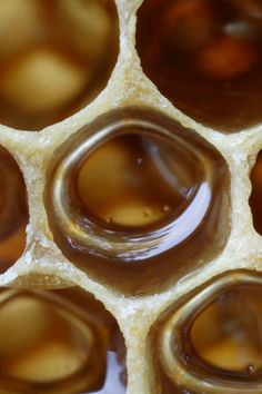 honey comb