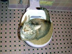 DIY Civilized Cat Toilet Training - This actually seems like a good system