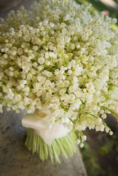 Bouquet of Lily of The Valley flowers wrapped in white ribbon White Flowers, Beautiful Flowers, Tiny Flowers, Birth Flowers, Exotic Flowers, Flowers Garden, Tropical Flowers, Yellow Roses, Simply Beautiful