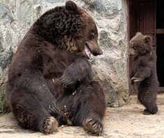 You straighten up !...(Mama bear and baby bear).... I know that feeling.