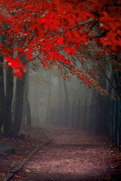Fall Mystery #Nature #Landscape
