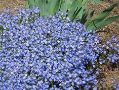 Plantes couvre sol croissance rapide dans le jardin moderne vagues design et cerises - Plantes d int u00e9rieur faciles d entretien ...